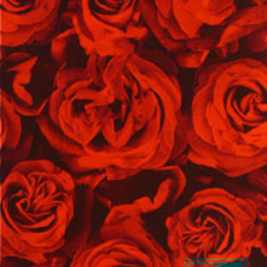 Geschenkpapier Rode Rozen 60297
